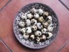 Výrobek: Čerstvá křepelčí vajíčka