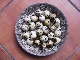 Obrázek výrobku: Čerstvá křepelčí vajíčka