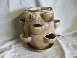 Obrázek výrobku: Byliňák, jahodník  - hnědý