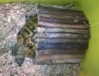 Výrobek: Dřevěný domeček pro želvu