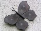 Výrobek: Měděný motýl